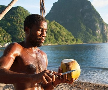 Fresh Coconuts in St. Lucia